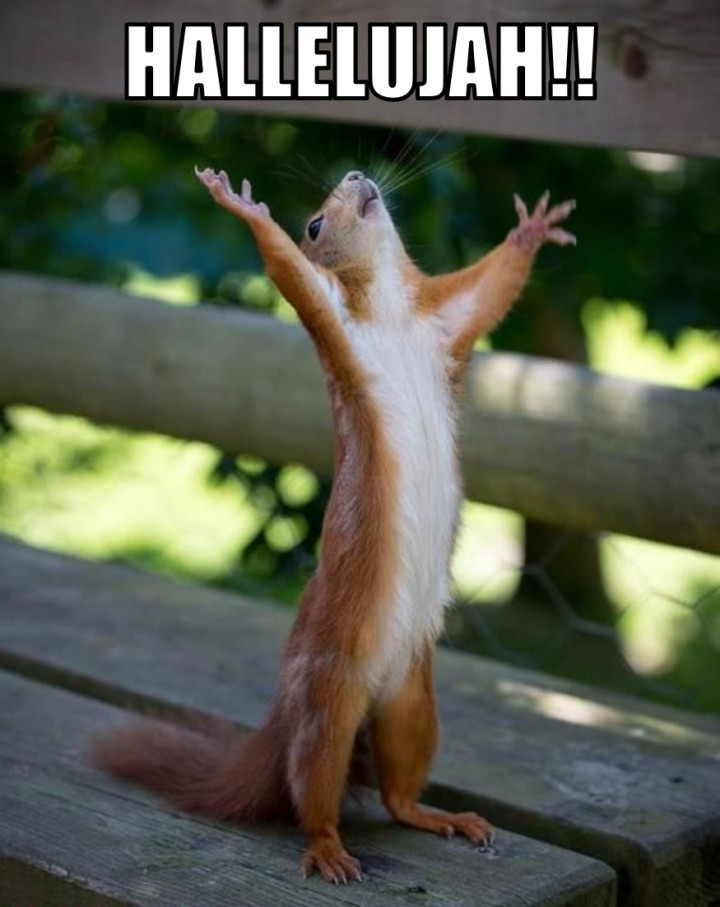 HallelujahSquirrel